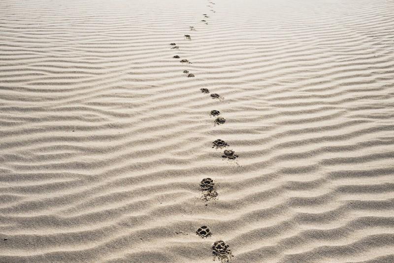 Foto de pegadas de sapato em areia de praia.